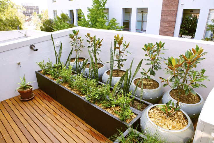 Everything You Need Know Ultimate Urban Gardener