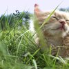Brown kitten rests in grass