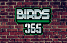 Limited - JAKIB Media -Birds 365