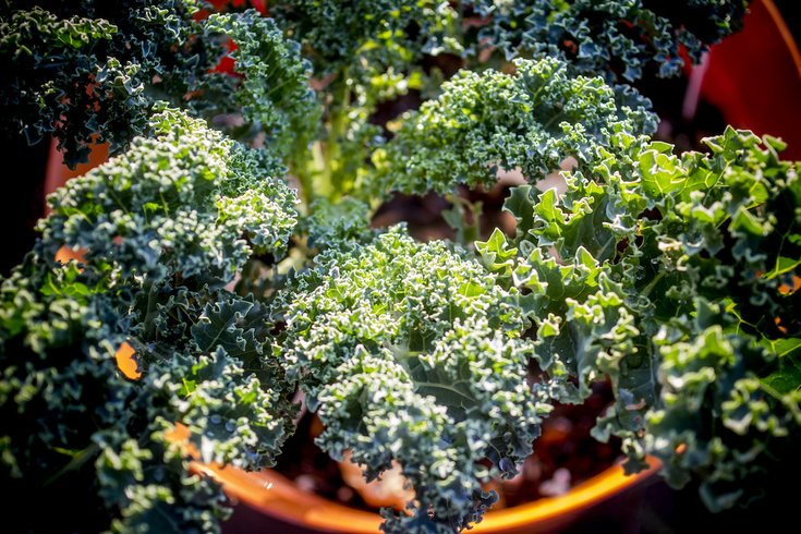 kale-flickr