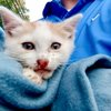Kittens Thrown Car New Jersey