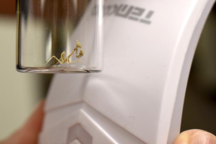 mantis bug cbp main