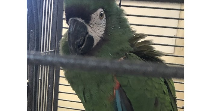 Three parrots stolen from Pennsylvania dairy farm and exotic animal zoo - EpicNews