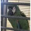Parrot theft pennsylvania