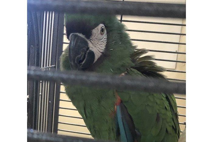 Parrot theft pennsylvania