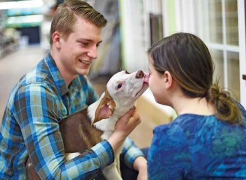 Puppy adoption