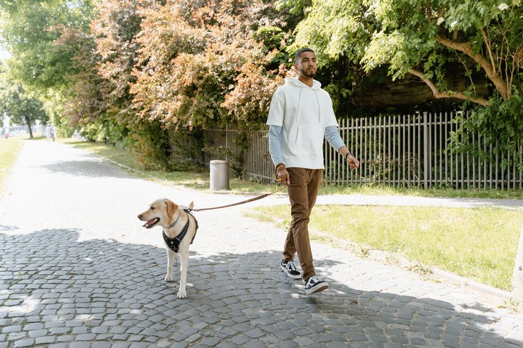 Man walking a dog in a park in summer