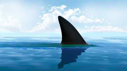 061715_shark