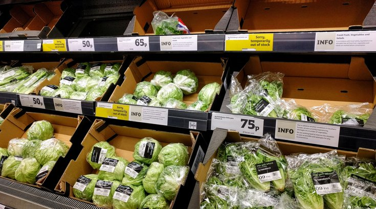 grocery store lettuce