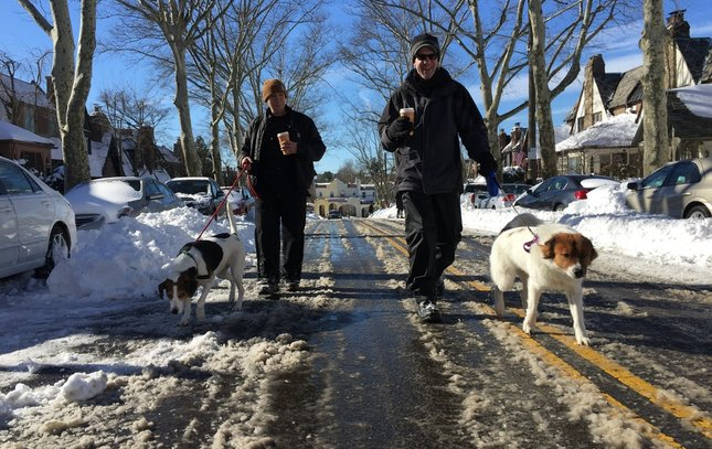Snow dogs east falls