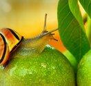 snail unsplash