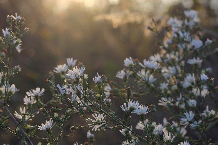 spring pollen allergies unsplash