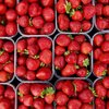 Strawberry Festival at Peddler's Village