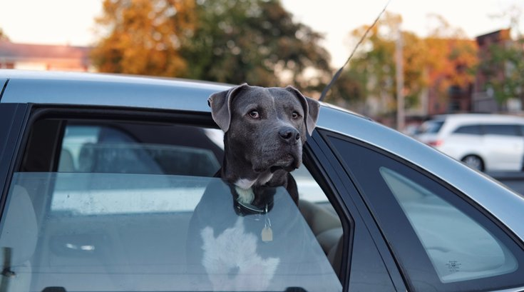 Uber Pet philly dogs